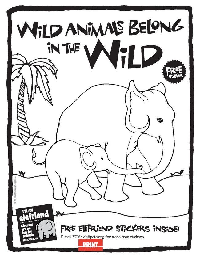 Free Circus Activity Book From Peta Kids