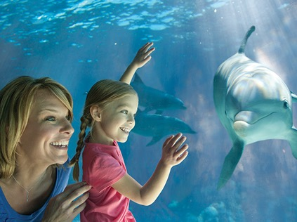 Free Unlimited Admission Fun Card + 2 Free Single-Day Tickets for Teachers (CA, AZ)