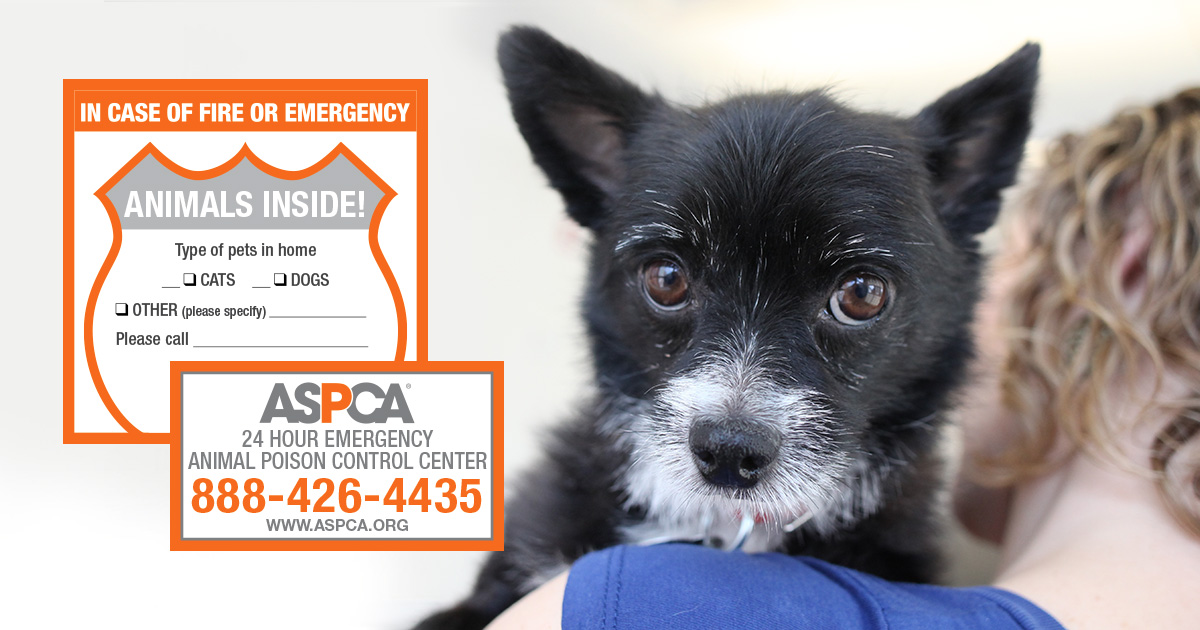 Free Pet Safety Pack with Magnet from ASPCA